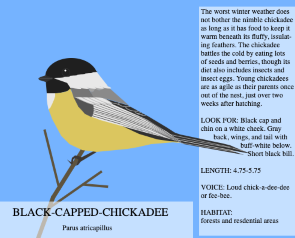 Black_Cap_Chickadee_Contest_Entry_by_silverleaf12.png